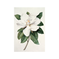 Mini Greeting Card - Magnolia