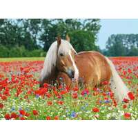 Ravensburger Puzzle 500pc - Horse in the Poppy Field